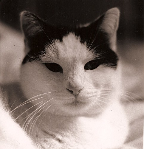 kitty_bw