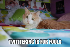 TWITTERING IS FOR FOOLS (Xuilla) Tags: silly macro cat computer for is blog funny phone lol internet computers communication amusing fools twat tweet lulz lul lolz catmacro twitter lolcat twittering tweeting lolcats editedpets