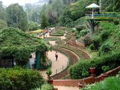 Botanical Gardens - Ootacamund (Ooty) - India 03