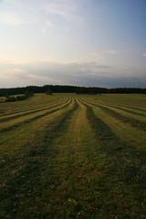 Linien im Gras (seeker0204) Tags: im wiese himmel wolken gras linien alsberg feldpattern