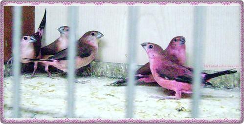 minik sevimli pembe kuşlar