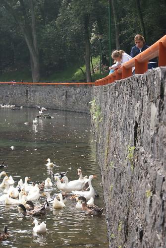 Alimentado a los patos by FotoMimo