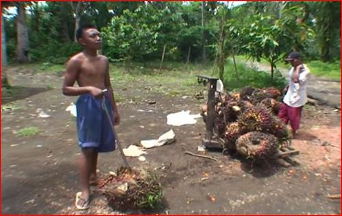 palmnuts