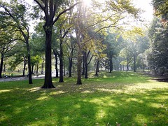 Central Park trees (brent flanders) Tags: nyc newyorkcity trees ny newyork tree statue skyscraper lumix skyscrapers centralpark manhattan statues panasonic empirestatebuilding bigapple newyorkskyscrapers microfourthirds dmcgf1