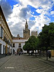 sevilla 143 (XimoPons : vistas 4.000.000 views) Tags: españa sevilla spain catedral andalucia catedraldesevilla ph227 ximopons