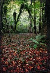 Gateway (Davy Ellis) Tags: autumn trees leaves woods ferns digitalcameraclub