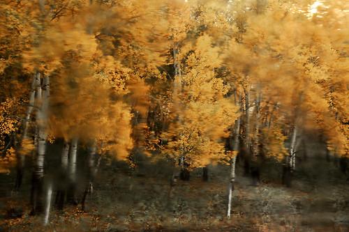 IMG_1787-w1 blur