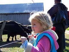 Looking at cows