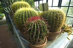 Padova: cactus spinosi (Gaspa) Tags: sanantonio padova ortobotanico ilprato