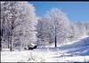 "neve sull'amiata ("" paolo ammannati "") Tags: italy alberi forest italia natura cielo tuscany neve toscana terra inverno colori bosco ghiaccio foresta lumen amiata cityart paoloammannati magicofnature allxpressus flickrestrellas effettinaturali mygearandme fotoconneve panoramaconneve onlythebestofnature"