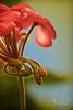 Shyness.. (SonOfJordan) Tags: blue light red portrait flower macro green closeup canon eos stem amman shy jordan growing xsi shyness 450d samawi sonofjordan shadisamawi wwwshadisamawicom