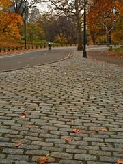 Autumn in Central Park on Film #15 (CVerwaal) Tags: nyc newyorkcity autumn newyork fall colors leaves analog cyclist bladerunner pavement stones centralpark perspective ishootfilm oldschool cobblestones biker bicyclist fujisuperia olympus35sp