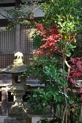 a garden lantern (fujiki3) Tags: hiyoshi