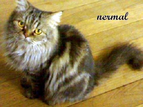 Nermal Jr. 01