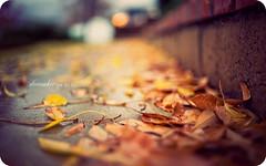 December Rain (isayx3) Tags: california summer cold colors leaves rain 35mm nikon december dof bokeh f2 365 nikkor tones d3 plainjoe isayx3