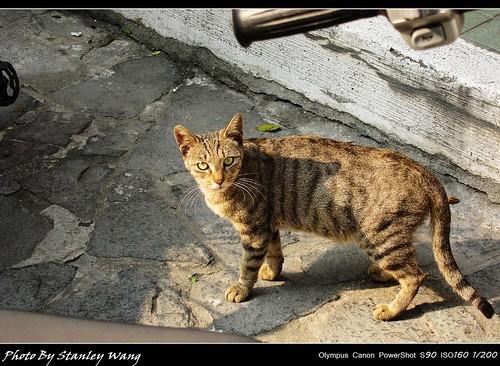 PowerShot S90 下的貓