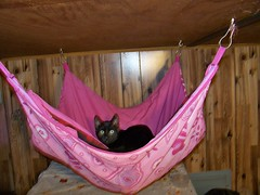 Jake found the hammock