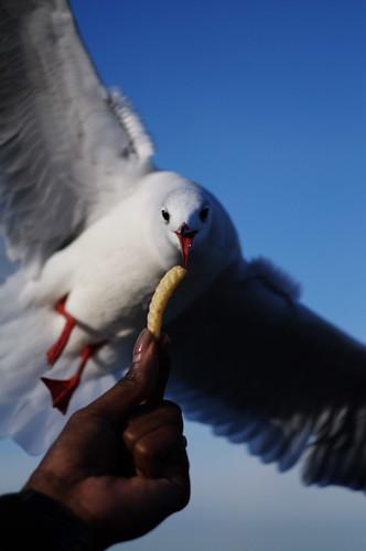 Seagull #3 もらったぜ