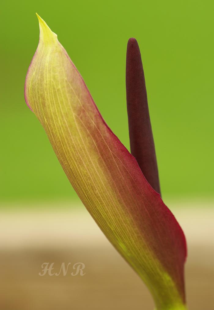 Fıstık Gibi Çiçek :)