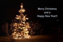 Merry Christmas and a Happy New Year!! (Rutger Blom) Tags: light snow lund tree public lights licht skne europa europe sweden sneeuw skandinavien christmastree boom sverige lamps scandinavia sn julkort trd scania christmascard kerstboom lichtjes zweden kerstkaart ljus skane julgran lampjes merrychristmasandahappynewyear lampor ef50mmf25compactmacro skanelan