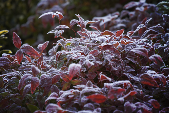 121909_frost1