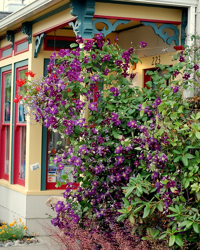 Bookstore Clematis