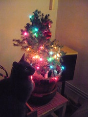Cat and Christmas Tree 1