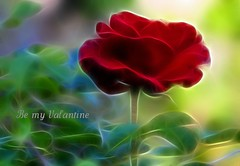 """Whisper Softly (Rosemarie.s.w) Tags: flowers red flower love floral rose bloom creativemoment theunforgettablepictures goldstaraward crazyheart fractalius """"flickraward"""" qualitygold ✿beautiflower✿"""