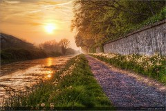 Sunset on the Royal Canal (bbusschots) Tags: ireland sunset evening canal path seed seeds maynooth hdr pathway towpath dandelions topaz kildare taraxacum royalcanal photomatix tonemapped tthdr taraxacumofficinaleagg topazadjust