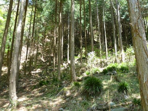 エコピアの森 幹の太さを計測 その1
