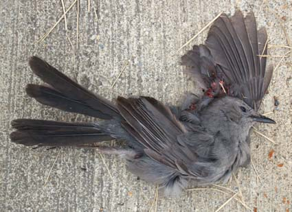 DeadCatbird