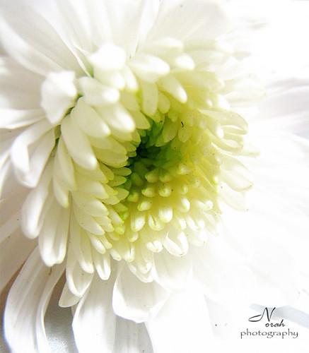 White Flower ..