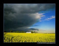 as the storm moves east (westrock-bob) Tags: blue summer canada storm black colors hail clouds rural dark grey power wind farm threatening gray bob ab canadian alberta lightning powerful 2009 thunder allrightsreserved westrock canola canadien violent threaten kanada rapeseed kanata cuthill colorphotoaward aplusphoto westrockbob bobcuthillphotographygmailcom saariysqualitypictures
