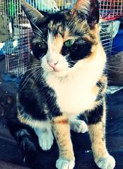 Mika ( Jovas  ) Tags: pet cat kat kitty gato felino mika mascota gatito fujifilmfinepixj10