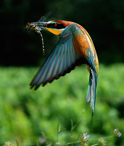 3811261844 5ee0277766 Beautiful Birds   The Splash of Colors!!!