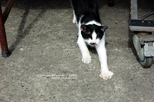 Cat。哈欠搖滾曲01.jpg