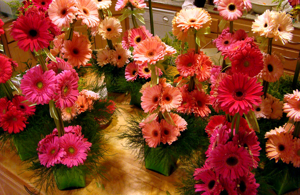 DSC00252 Gerbera Daisies Triple Decker production