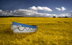 High and dry (Ddeek) Tags: sky field yellow clouds golden boat wheat august juxtaposition 2009 incongruous improbable
