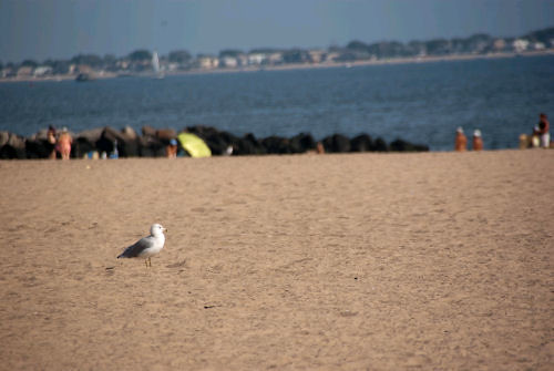 Seagull standing on Brighton Beach