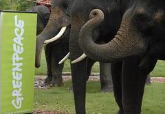 Chang(e) Caravan at Ancient Siam คาราวานช้างที่เมืองโบราณ