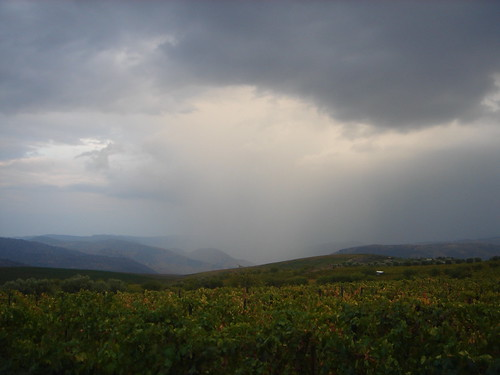 Raining during the harvest 2009