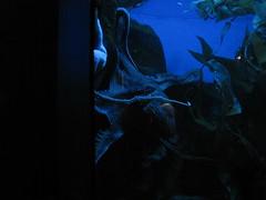 Newport Aquarium 014 (foodbyfax) Tags: newportaquarium