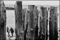 2 - 23 octobre 2009 Saint-Malo Plage du Sillon Brise-lames (melina1965) Tags: wood blackandwhite bw sand nikon october noiretblanc sable bretagne plage 2009 saintmalo bois octobre breakwater plages illeetvilaine d80 photoscape briselames