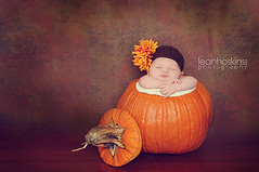 .pumpkin love. (*miss*leah*) Tags: autumn sleeping baby flower fall texture hat season pumpkin nikon newborn nikond300 leahhoskins