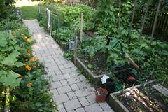my september kitchen garden