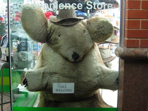 koala or womble