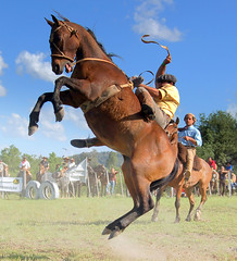 O pulo... (Eduardo Amorim) Tags: brazil horses horse southamerica brasil caballo cheval caballos cavalos pferde cavalli cavallo cavalo gauchos pferd riograndedosul pampa hest hevonen campanha brsil chevaux gaucho  amricadosul bag fronteira hst gacho  amriquedusud  gachos  sudamrica suramrica amricadelsur  sdamerika jineteada   americadelsud gineteada  americameridionale eduardoamorim travelsofhomerodyssey iayayam yamaiay