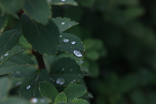 leaves&drops by cigo2009