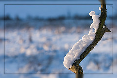 Winter in Mechels Broek (eosfoto) Tags: winter snow nature landscape sneeuw natuur 2009 soe mechelen landschap naturesfinest natuurgebied scherptediepte theworldwelivein mechelsbroek flickrsbest bej 40d abigfave wintersfeer diamondclassphotographer flickrdiamond theunforgettablepictures theperfectphotographer spiritofphotography thebestofcengizsqueezeme2groups adrinnesmagicalmoments