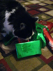 Josie investigating the gifts